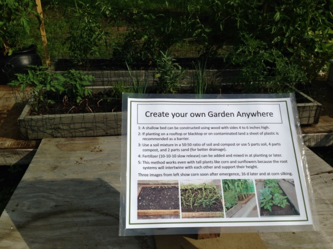 Create your own garden at home!