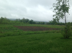 The site of the Amherst Pollinator Garden.