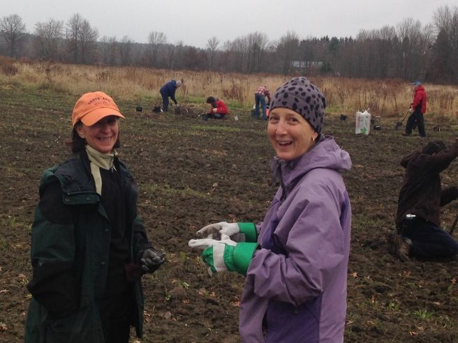 Amherst Sustainability Coordinator, Stephanie Ciccarello, is consulting with Grow Food Amherst member, Rebecca Fricke, while volunteers plant donated plants at the new farm.