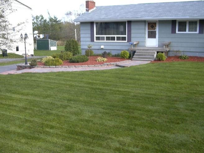 clean cut front lawn2